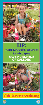 Native Plants Print Ad